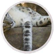 Snow Leopard Nap Round Beach Towel by Mike  Dawson