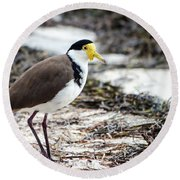 Southern Masked Lapwing Round Beach Towel by Nicholas Blackwell