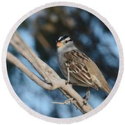 Sparrow Time Round Beach Towel by Fraida Gutovich