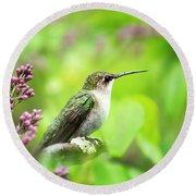 Spring Beauty Ruby Throat Hummingbird Round Beach Towel by Christina Rollo