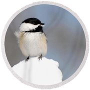 Summit - Black-capped Chickadee Round Beach Towel by Christina Rollo