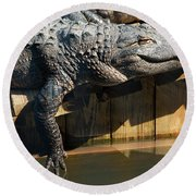 Sunbathing Gator Round Beach Towel by Carolyn Marshall