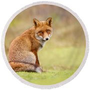 That Look - Red Fox Male Round Beach Towel by Roeselien Raimond