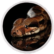 The Boa Constrictors, Isolated On Black Background Round Beach Towel by Sergey Taran