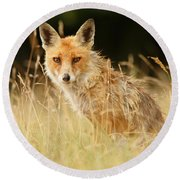 The Catcher In The Grass - Wild Red Fox Round Beach Towel by Roeselien Raimond