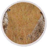 The Cheetahs Round Beach Towel by Stephen Smith
