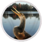 The Great Golden Crested Anhinga Round Beach Towel by David Lee Thompson