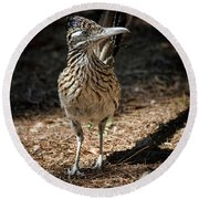 The Greater Roadrunner Walk  Round Beach Towel by Saija Lehtonen