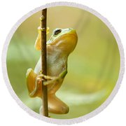 The Pole Dancer - Climbing Tree Frog  Round Beach Towel by Roeselien Raimond