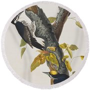 Three Toed Woodpecker Round Beach Towel by John James Audubon