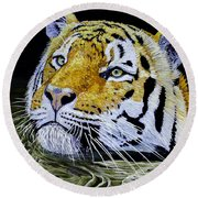 Tiger 24x18x1 Inch Oil On Gallery Canvas Round Beach Towel by Manuel Lopez