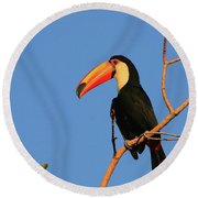 Toco Toucan Round Beach Towel by Bruce J Robinson