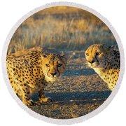 Two Cheetahs Round Beach Towel by Inge Johnsson