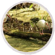 Two Ibises On A Log Round Beach Towel by Carol Groenen
