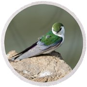 Violet-green Swallow Round Beach Towel by Mike Dawson