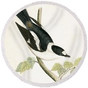 White Collared Flycatcher Round Beach Towel by English School