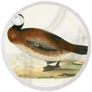 White Headed Duck Round Beach Towel by English School
