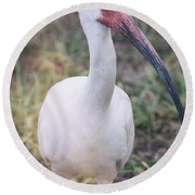 White Ibis In The Morning Light  Round Beach Towel by Saija  Lehtonen
