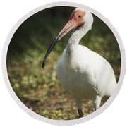 White Ibis On A Walk  Round Beach Towel by Saija  Lehtonen