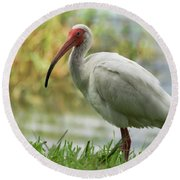 White Ibis On The Florida Shore  Round Beach Towel by Saija Lehtonen