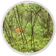 Round Beach Towel featuring the photograph White-tailed Deer In A Pennsylvania Forest by A Gurmankin