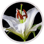 White Tiger Lily Still Life Round Beach Towel by Garry Gay