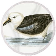 Yellow Nosed Albatross Round Beach Towel by English School