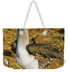 Blue-footed Booby Courtship Behavior Weekender Tote Bag by William H. Mullins