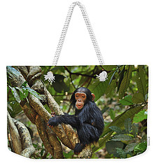 Chimpanzee Baby On Liana Gombe Stream Weekender Tote Bag by Thomas Marent