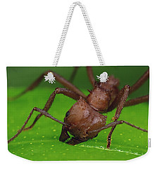 Leafcutter Ant Cutting Papaya Leaf Weekender Tote Bag by Mark Moffett