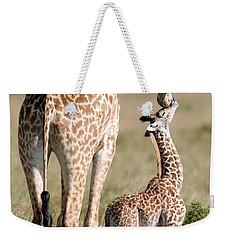 Masai Giraffe Giraffa Camelopardalis Weekender Tote Bag by Panoramic Images