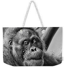 Orangutan Mama Weekender Tote Bag by Phill Doherty