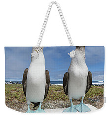 Blue-footed Booby Pair Courting Weekender Tote Bag by Tui De Roy