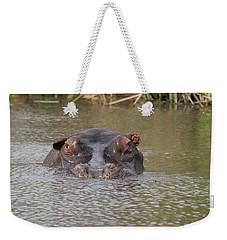 Hippopotamus Hippopotamus Amphibius Weekender Tote Bag by Panoramic Images