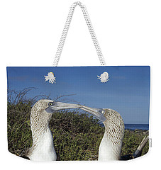 Blue-footed Boobies Courting Galapagos Weekender Tote Bag by Tui De Roy