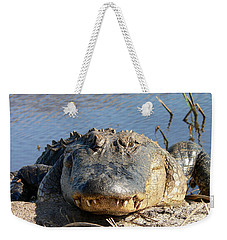 Alligator Approach Weekender Tote Bag by Al Powell Photography USA