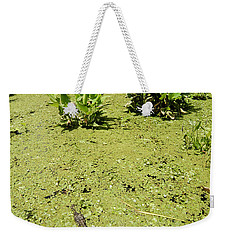 Alligator In Corkscrew Swamp, Florida Weekender Tote Bag by Gregory G. Dimijian