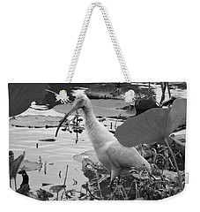 American White Ibis Black And White Weekender Tote Bag by Dan Sproul