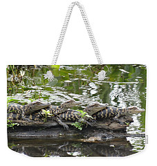 Baby Alligators Weekender Tote Bag by Dan Sproul