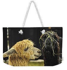 Bad Hair Day Farm Show Harrisburg Pa Weekender Tote Bag by Terry DeLuco