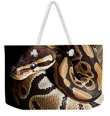 Weekender Tote Bag featuring the photograph Ball Python Python Regius by David Kenny