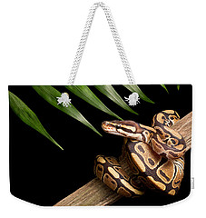 Ball Python Python Regius On Branch Weekender Tote Bag by David Kenny