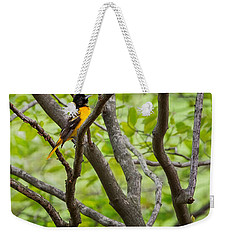 Baltimore Oriole Weekender Tote Bag by Bill Wakeley