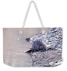 Beaver On Dry Land Weekender Tote Bag by Chris Flees