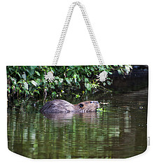 beaver swims in NC lake Weekender Tote Bag by Chris Flees