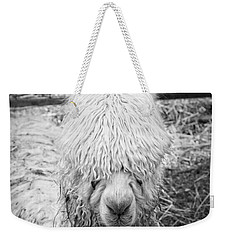 Black And White Alpaca Photograph Weekender Tote Bag by Keith Webber Jr