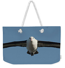 Black-browed Albatross Thalassarche Weekender Tote Bag by Panoramic Images