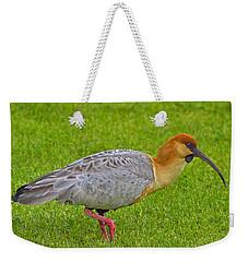 Black-faced Ibis Weekender Tote Bag by Tony Beck