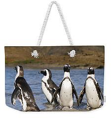 Black-footed Penguins On Beach Cape Weekender Tote Bag by Alexander Koenders