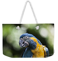 Blue And Gold Macaw V5 Weekender Tote Bag by Douglas Barnard